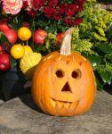 503px-balle-a-leunettes_halloween