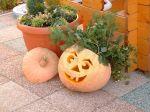 pumpkin_halloween
