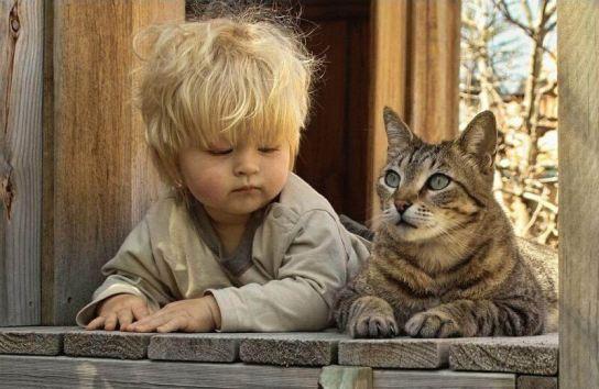 129_animals_91743