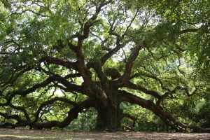angel_oak_17
