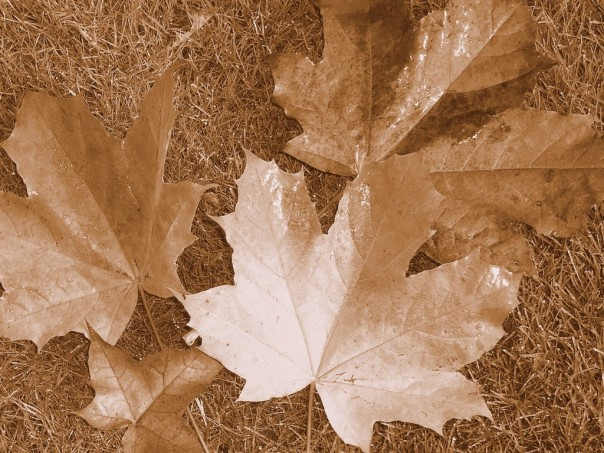 Sepia-Leaves