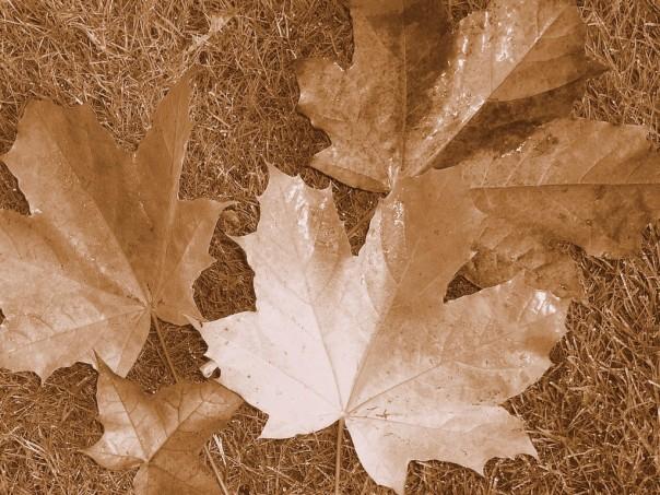 Sepia-Leaves