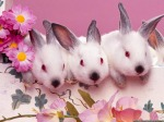 Cute-Easter-Bunnies
