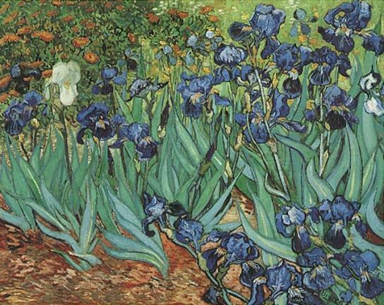 Vincent Van Gogh - Irises. Saint-Rémy
