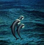 Sabin Bălaşa - Saint Dolphins