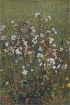 Henri Martin-White flowers in the field
