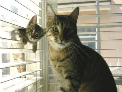 135089-1024x768-cute-cats
