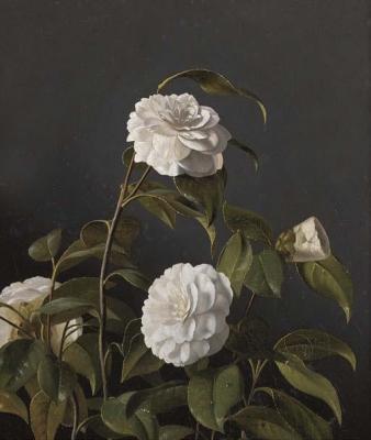 Otto Didrik Ottesen - Camellias