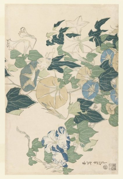 Katsushika Hokusai - Morning Glories in Flowers and Buds