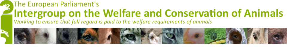 animal-welfare-intergroup