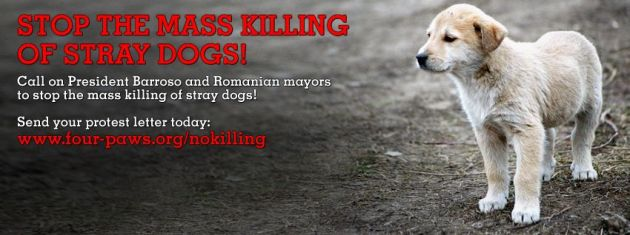 Protest with us and give Romanian stray dogs a chance to live!