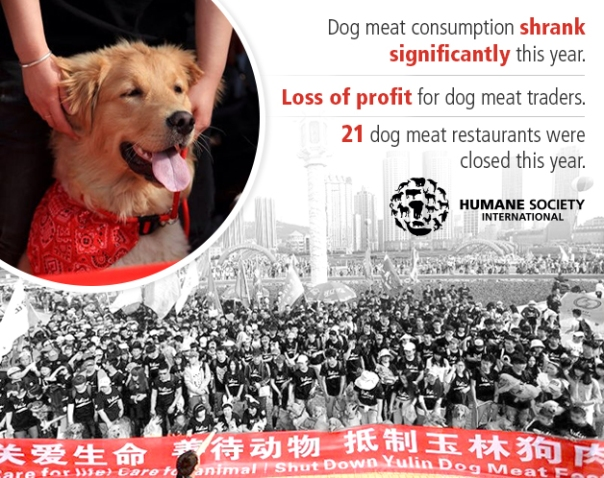 Thanks to you, the dog meat trade is fading